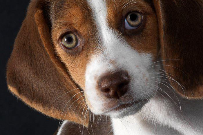 Ученые узнали, что собаки умеют читать мысли людей— Собачья телепатия
