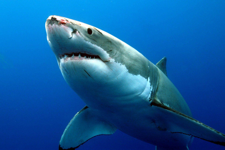 Греческие рыболовы словили семиметровую акулу