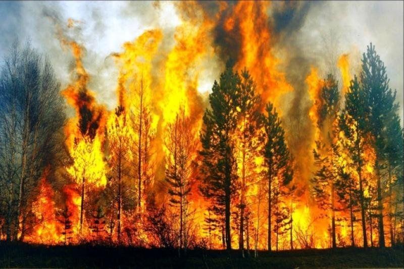 Взоне отселения вФукусиме третьи сутки гасят пожар