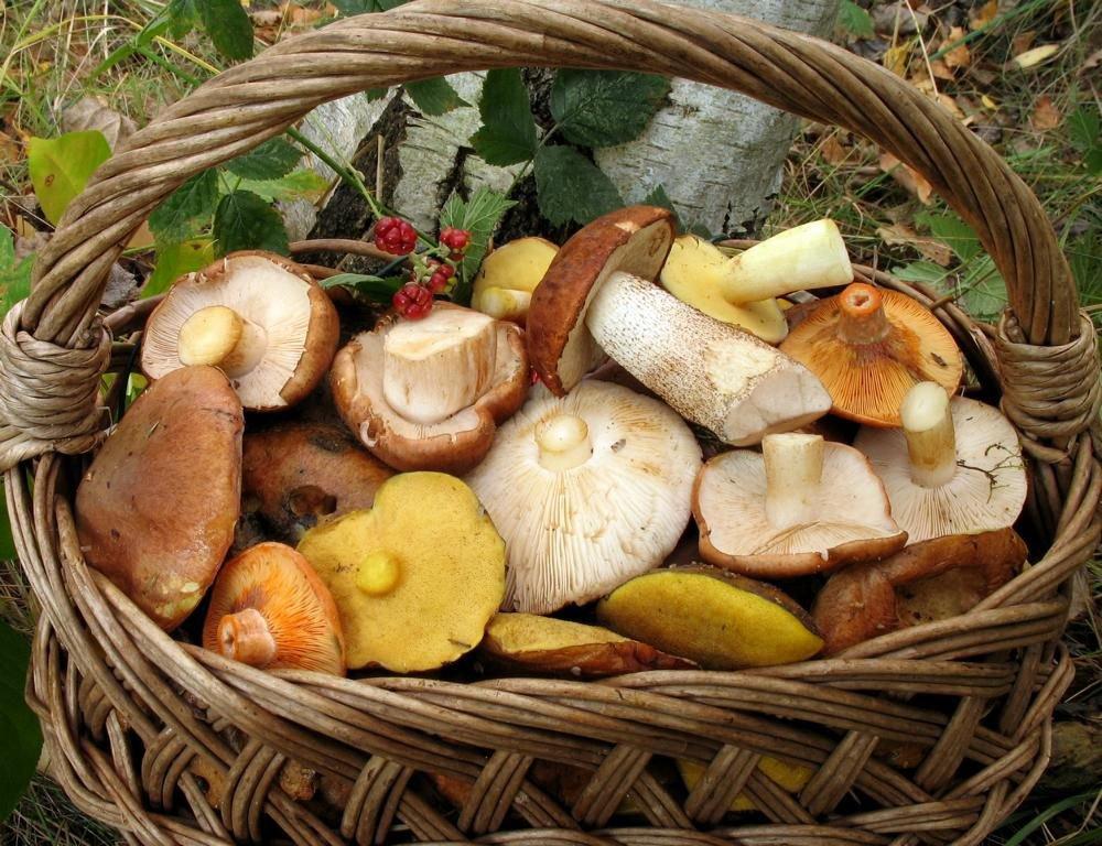 Ученые назвали правильные методы приготовления грибов