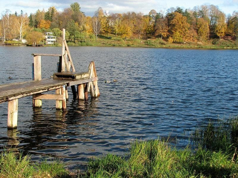 Бедро мужчины отыскали наберегу озера вПетербурге