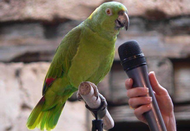 ВСША говорящий попугай помог следователям отыскать убийцу