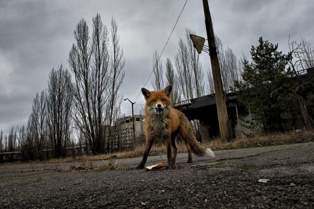 Взоне Чернобыльской АЭС задержаны трое туристов-экстремалов