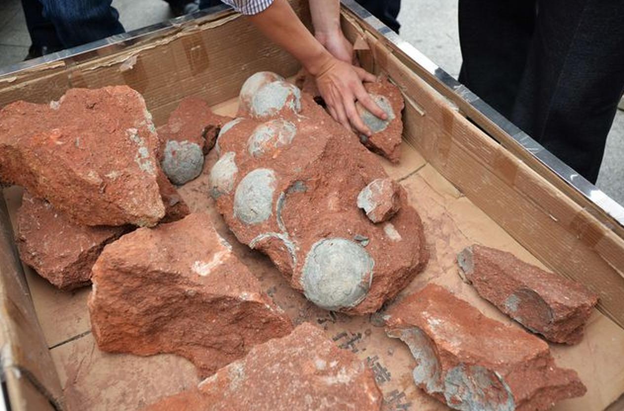 Гнезду динозавра, найденному в«Поднебесной», 130 млн. лет