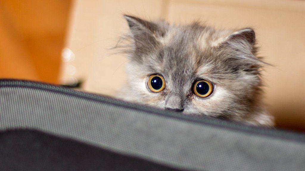 Красноярские подростки решили «разогреть» кошку вдуховке