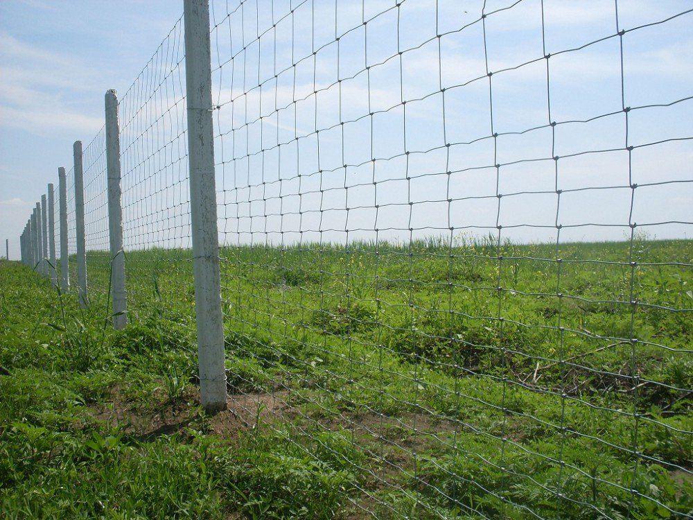 Польша построит забор отбольных свиней РФ , республики Белоруссии  иУкраины