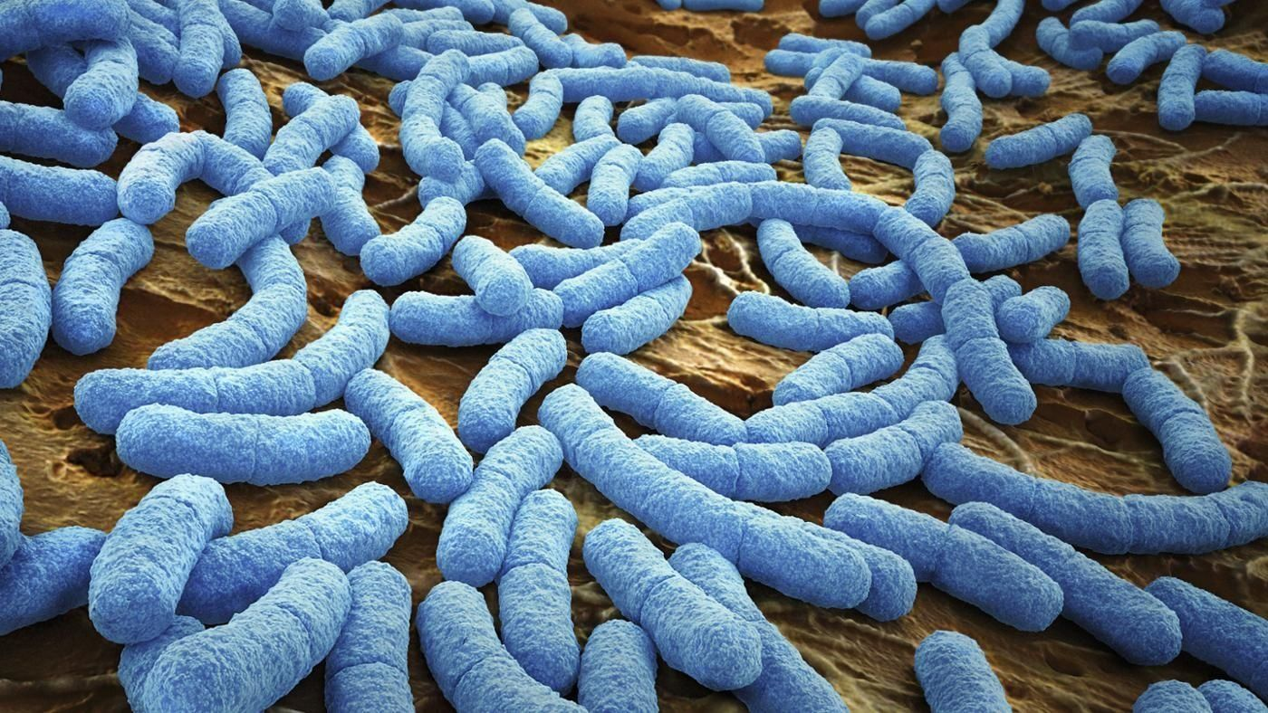 персонаж, фото бактерий человека на теле неё