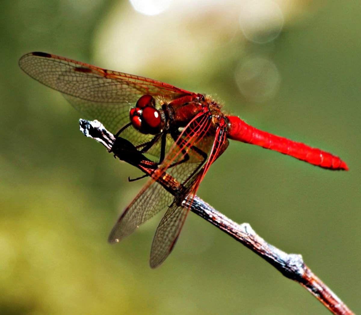 Уназемных насекомых сначала эволюции присутствовало обоняние