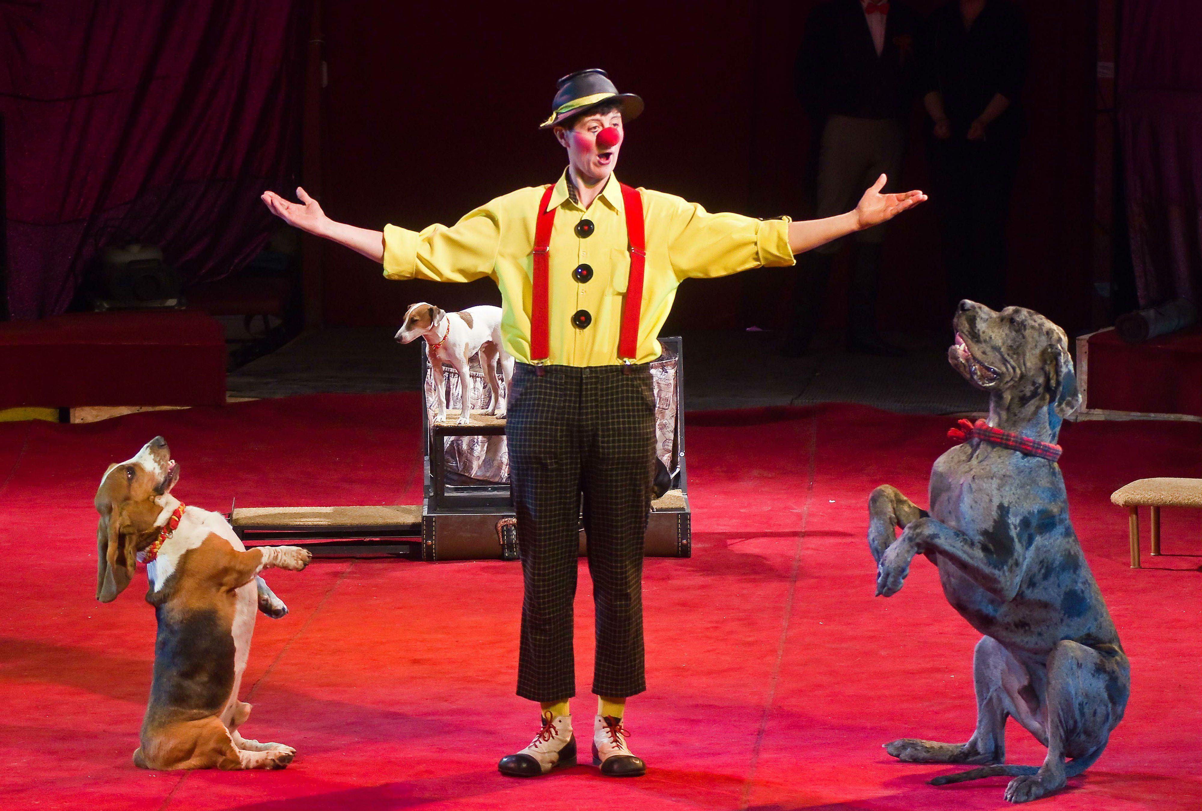 картинки артисты цирка животные стремятся разместить объявление