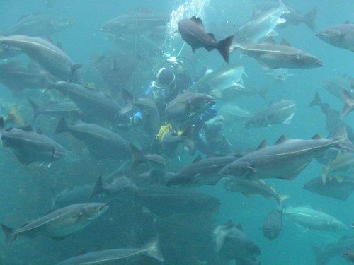 Рыбаки Камчатки в 2019 году добудут более 300 тыс. тонн лосося