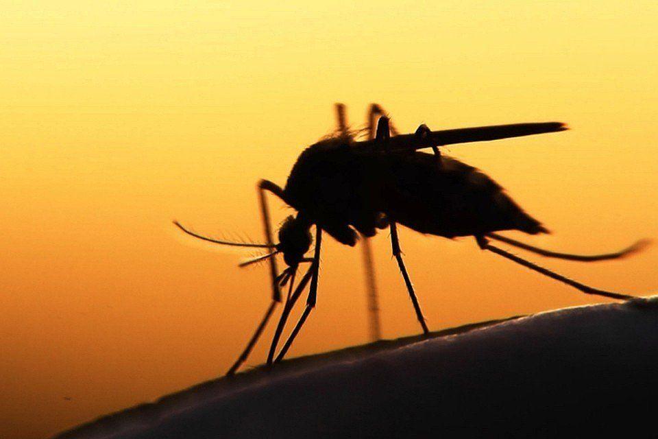 Картинки комары и мошки, картинки