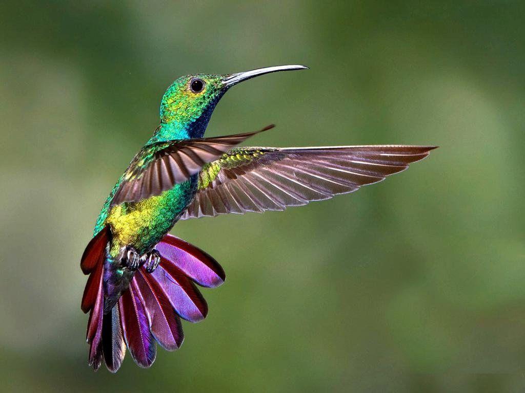 Клумба колибри фото корзины с цветами лагуна лучшие